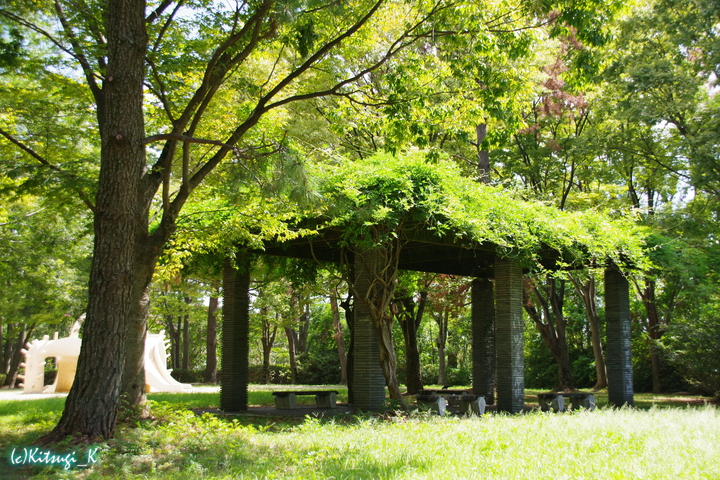 万博記念公園-自然文化園北西部の画像の14枚目